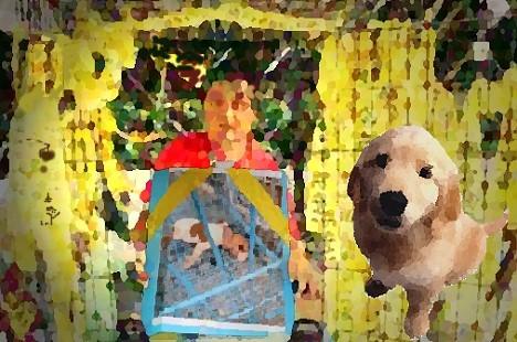 13年百萬犬隻遭安樂死 黃泰山為流浪狗奮鬥